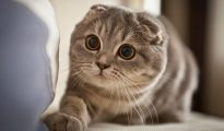 nằm mơ thấy mèo đánh con gì