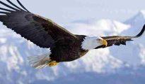 Mơ thấy chim ưng đánh con gì, là điềm đen hay đỏ?