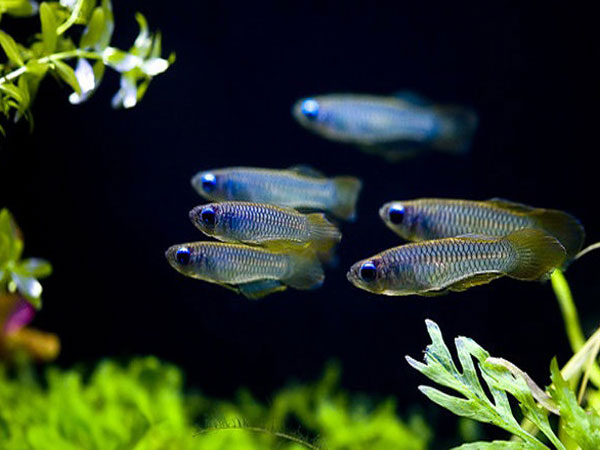 Giấc mơ may mắn: Mơ thấy cá