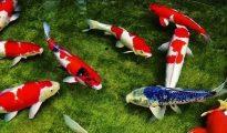 nằm mơ thấy cá là điềm báo gì