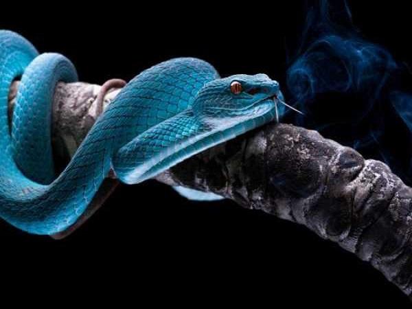 Mơ thấy rắn cắn đánh con gì?