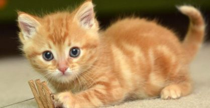 Mơ thấy mèo điềm báo gì